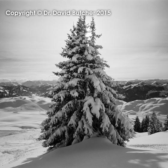 Kitzbuhel Snowy Tree